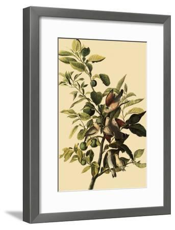 Ground Doves-John James Audubon-Framed Giclee Print