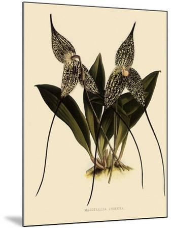 Masdevallia Chimaera-John Nugent Fitch-Mounted Giclee Print