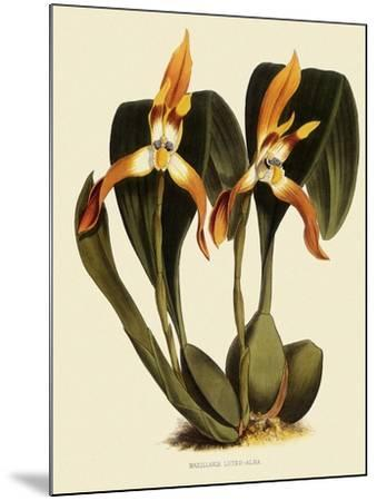 Maxillaria Luteoalba-John Nugent Fitch-Mounted Giclee Print