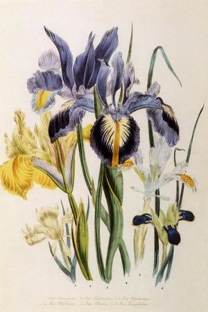 Iris-Jane W^ Loudon-Framed Giclee Print
