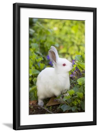 Rabbit--Framed Photographic Print