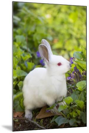 Rabbit--Mounted Photographic Print