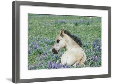 Wild Horse--Framed Photographic Print