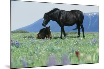 Wild Horse--Mounted Photographic Print