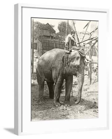 Elephant with Someone on His Mind--Framed Photo