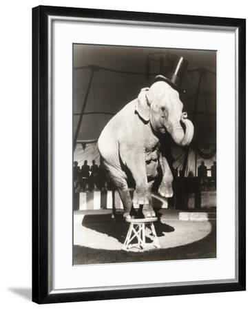 Elephant Wearing Top Hat Performing on Stool in Circus--Framed Photo