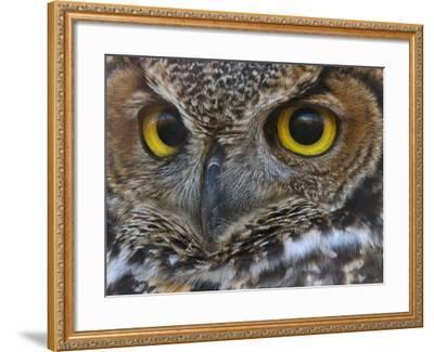Owl Eyes-Larry McFerrin-Framed Photo