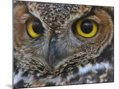 Owl Eyes-Larry McFerrin-Mounted Photo