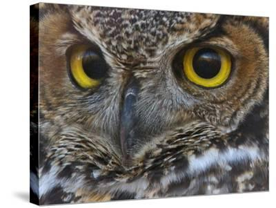 Owl Eyes-Larry McFerrin-Stretched Canvas Print