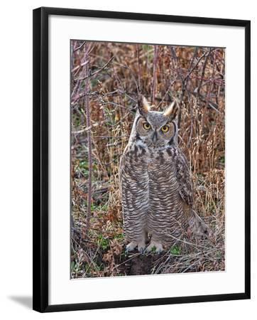 Great Horned Owl-Larry McFerrin-Framed Photo