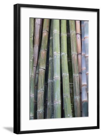 Bamboo Fence-Ramona Murdock-Framed Photo