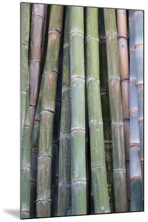 Bamboo Fence-Ramona Murdock-Mounted Photo