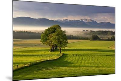 Germany, Bavaria, Faistenberg, View at Zwiesel, Benediktenwand, Bavarian Alpine Foothills-Bernd Rommelt-Mounted Photographic Print