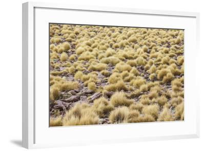 Chile, Pampas Incahuasi, Ischu Grass-Jutta Ulmer-Framed Photographic Print