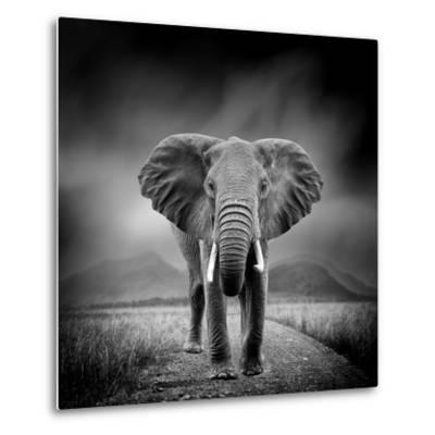 Black and White Image of A Elephant-byrdyak-Metal Print