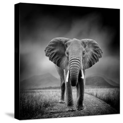 Black and White Image of A Elephant-byrdyak-Stretched Canvas Print
