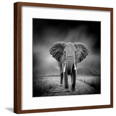 Black and White Image of A Elephant-byrdyak-Framed Photographic Print