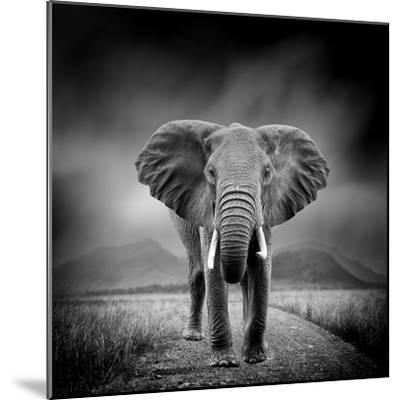 Black and White Image of A Elephant-byrdyak-Mounted Photographic Print