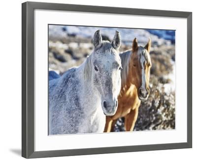 Horse Fort Ranch 6-Chris Dunker-Framed Photographic Print