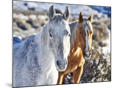 Horse Fort Ranch 6-Chris Dunker-Mounted Photographic Print