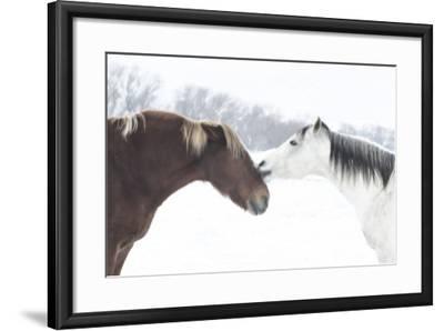 Grand Canyon Old Saddle 1-Chris Dunker-Framed Photographic Print