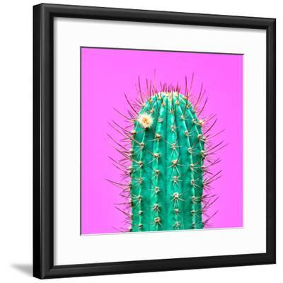 Cactus - Neon Pink Minimal Stillife-Indigo Photo Club-Framed Photographic Print