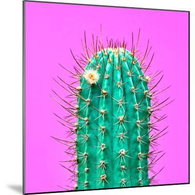 Cactus - Neon Pink Minimal Stillife-Indigo Photo Club-Mounted Photographic Print