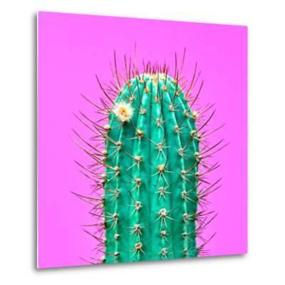 Cactus - Neon Pink Minimal Stillife-Indigo Photo Club-Metal Print