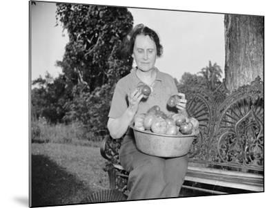 Director of the Mint Nellie Tayloe Ross relaxes on her Maryland farm, 1938-Harris & Ewing-Mounted Photographic Print