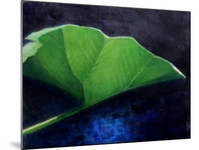Gunnera Leaf-Lincoln Seligman-Mounted Giclee Print