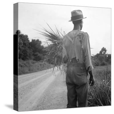 African-American on cotton patch in Mississippi, 1936-Dorothea Lange-Stretched Canvas Print