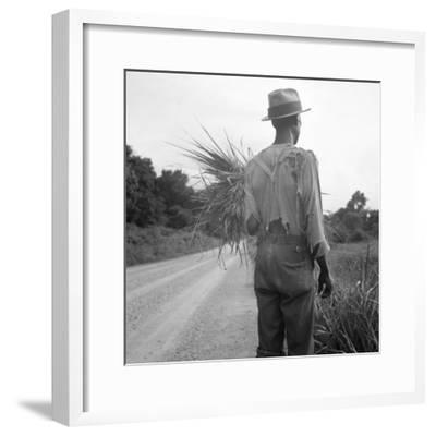 African-American on cotton patch in Mississippi, 1936-Dorothea Lange-Framed Photographic Print
