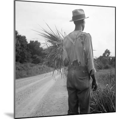 African-American on cotton patch in Mississippi, 1936-Dorothea Lange-Mounted Photographic Print