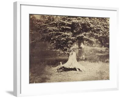 The Beech Tree, c.1855-7-Gustave Le Gray-Framed Photographic Print