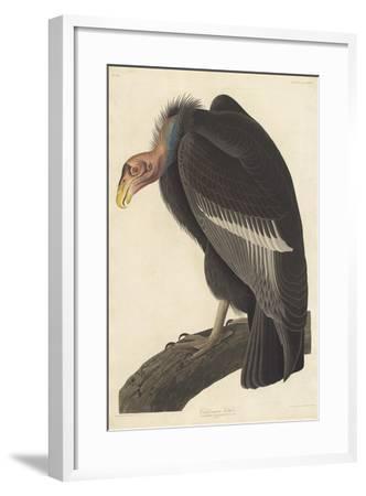 Californian Vulture, 1838-John James Audubon-Framed Giclee Print