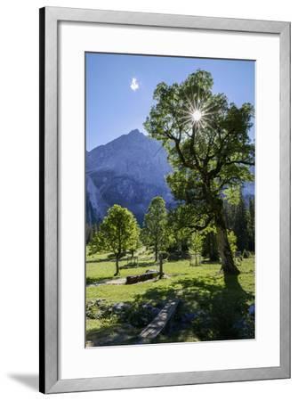 Small Ahornboden, Harewood in the Back Light in Front of Rauhkarlspitze, Karwendel, Tyrol-Rolf Roeckl-Framed Photographic Print