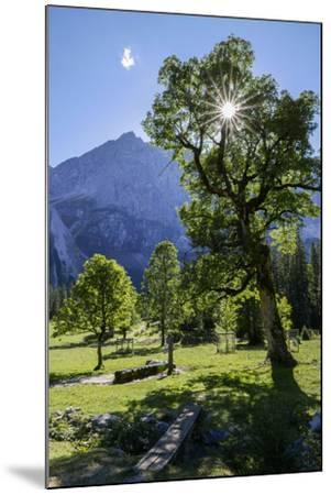 Small Ahornboden, Harewood in the Back Light in Front of Rauhkarlspitze, Karwendel, Tyrol-Rolf Roeckl-Mounted Photographic Print