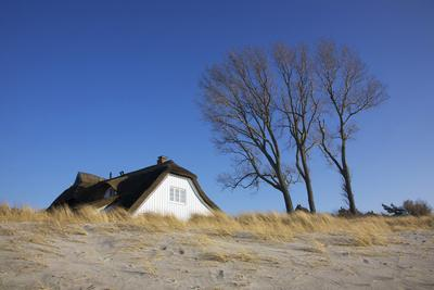Thatched Beach House under the Big Poplars in Ahrenshoop-Uwe Steffens-Framed Photographic Print