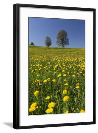 Blossoming Meadow, Spring, Tree, Blue Sky, Dandelion-Jurgen Ulmer-Framed Photographic Print