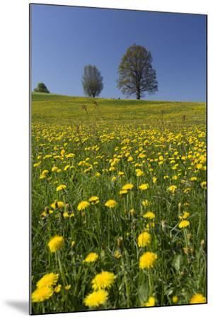 Blossoming Meadow, Spring, Tree, Blue Sky, Dandelion-Jurgen Ulmer-Mounted Photographic Print