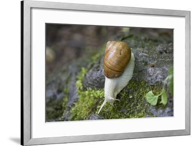 French Escargot, Moss, Stone-Jurgen Ulmer-Framed Photographic Print