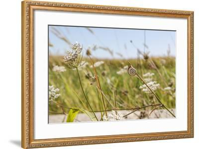 Snail House on the Stem of a Plant-Petra Daisenberger-Framed Photographic Print