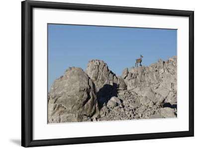 Capricorn on Rocky Ridge-Jurgen Ulmer-Framed Photographic Print
