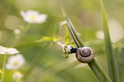 Escargot, Tree Escargot, Flowers-Jurgen Ulmer-Framed Photographic Print