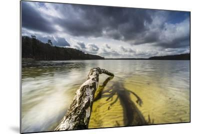 Dead Trees, Brandenburg, Germany-Falk Hermann-Mounted Photographic Print