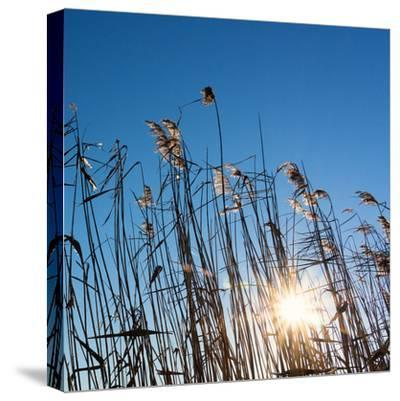 Baltic Sea-Catharina Lux-Stretched Canvas Print
