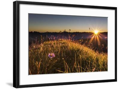 Flower, Aster, Meadow-Jurgen Ulmer-Framed Photographic Print