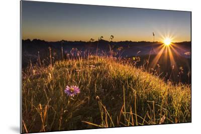 Flower, Aster, Meadow-Jurgen Ulmer-Mounted Photographic Print