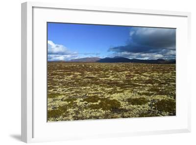 Norway, Dovrefjell-Sunndalsfjella National Park, Autumn in Dovrefjell, Plateau with Cup Lichens-K. Schlierbach-Framed Photographic Print