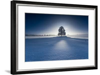 Single Broad-Leaved Tree in Winter Scenery in the Back Light, Triebtal, Vogtland, Saxony, Germany-Falk Hermann-Framed Photographic Print